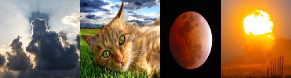 gato_apocalíptico